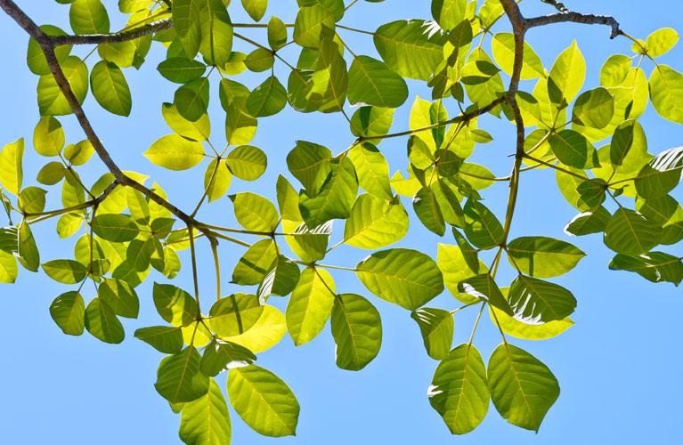 image-services-environmentallyfriendly